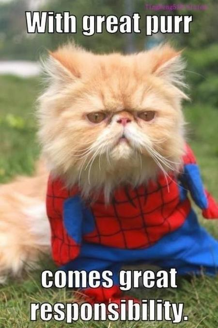 With great purr comes great responsibility